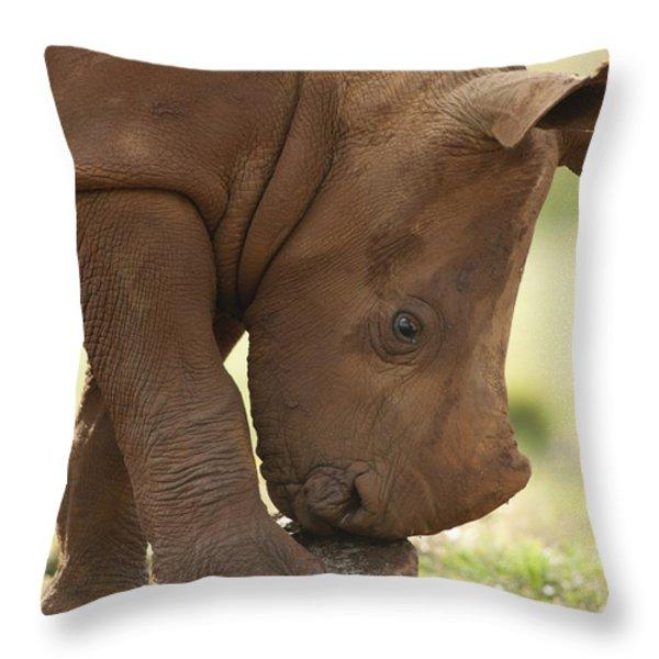 White Rhinoceros Ceratotherium Simum Throw Pillow by Matthias Breiter
