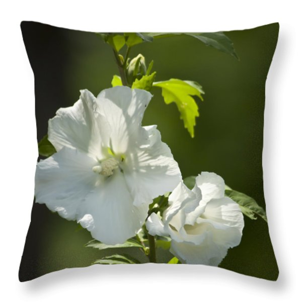 White Rose Of Sharon Squared Throw Pillow by Teresa Mucha