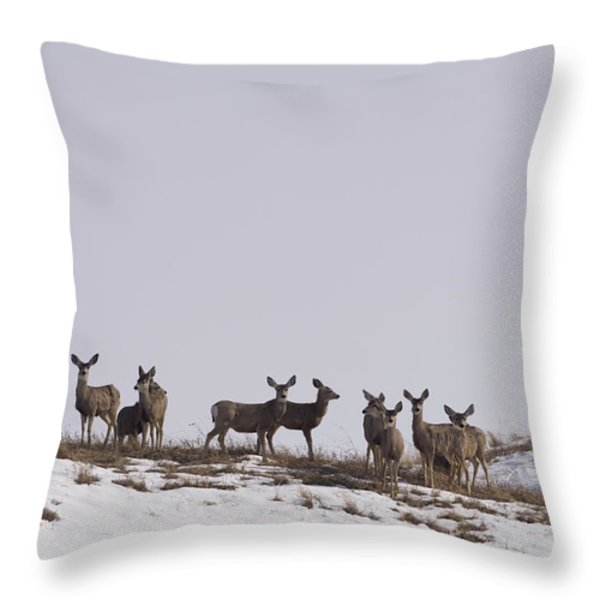Whitetail Deer In The Snow In Burwell Throw Pillow by Joel Sartore