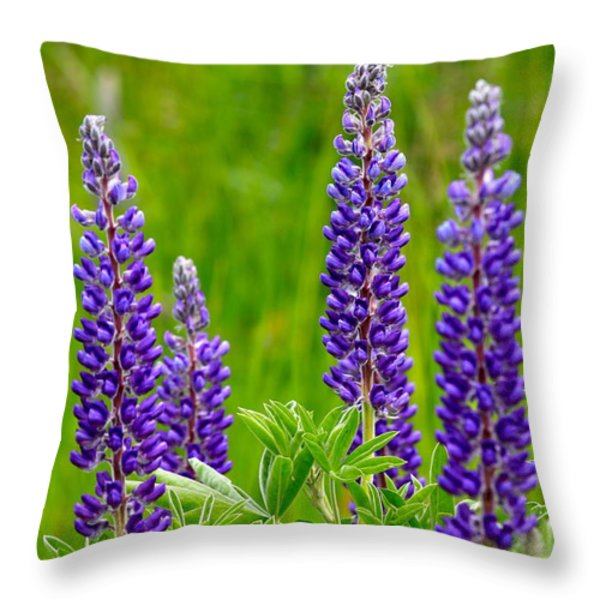 Wild Lupine Throw Pillow by Karon Melillo DeVega