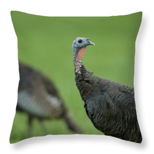 Wild Turkey Meleagris Gallopavo Throw Pillow by Joel Sartore