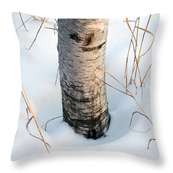 Winter Birch Throw Pillow by Bill Morgenstern