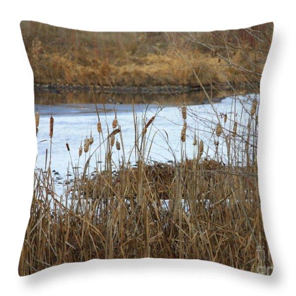 Winter Cattails Throw Pillow by Carol Groenen