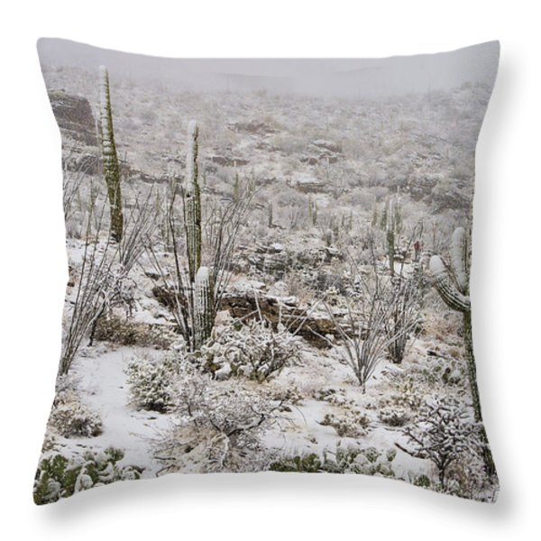 Winter In The Desert Throw Pillow by Sandra Bronstein