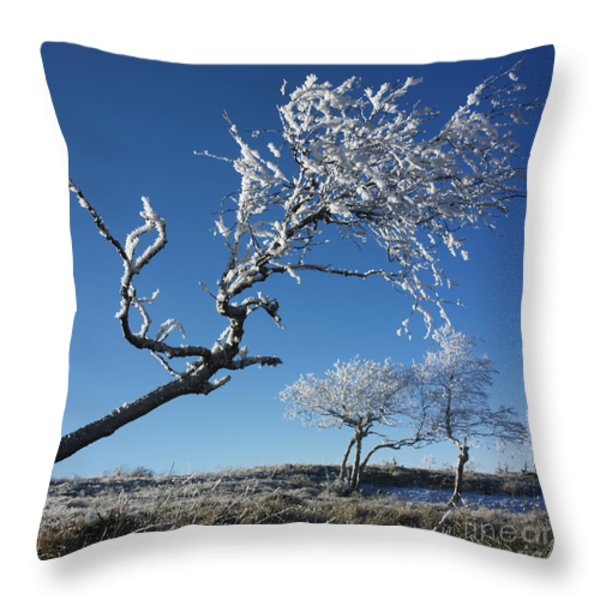 Winter tree. Throw Pillow by BERNARD JAUBERT