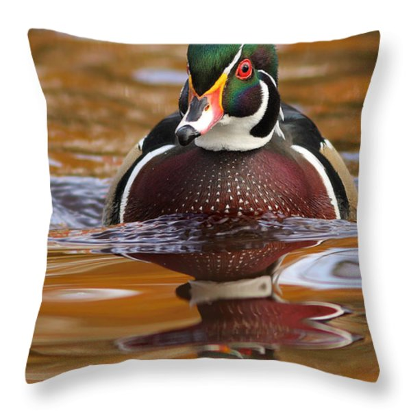Wood-duck-male On The Golden Light Throw Pillow by Mircea Costina Photography