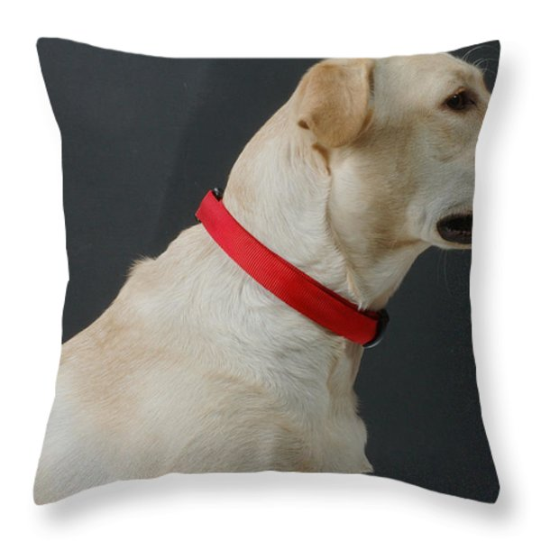 Yellow Lab Throw Pillow by Jerry McElroy
