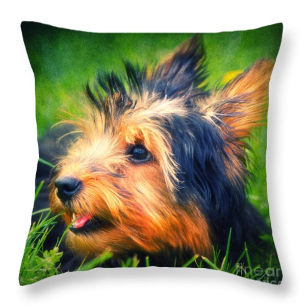 Yorki Throw Pillow by Angela Doelling AD DESIGN Photo and PhotoArt