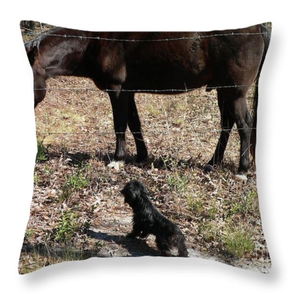 You Lookin At Me Throw Pillow by Al Powell Photography USA