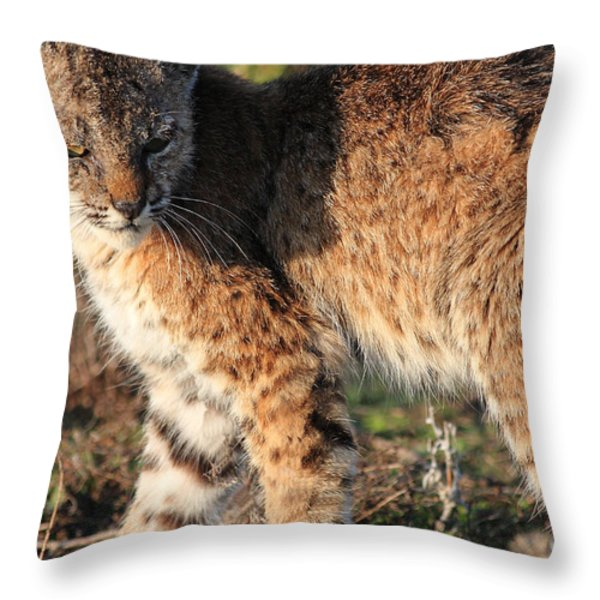 Young Bobcat 01 Throw Pillow by Wingsdomain Art and Photography