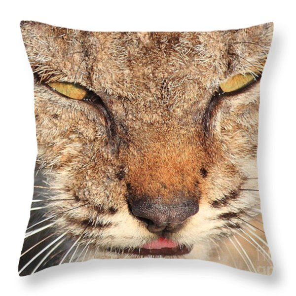 Young Bobcat Portrait 01 Throw Pillow by Wingsdomain Art and Photography