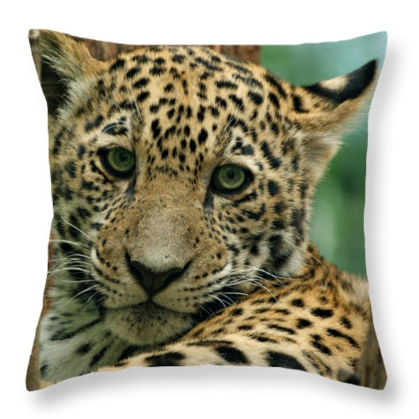 Young Jaguar Throw Pillow by Sandy Keeton