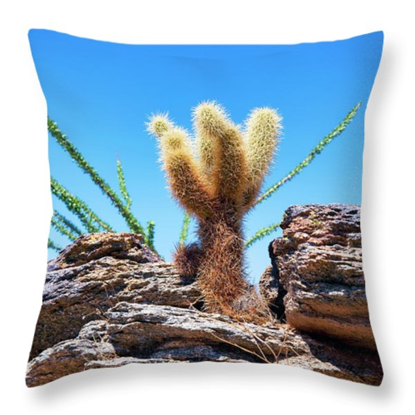 Young Teddy Bear Cholla Throw Pillow by Kelley King