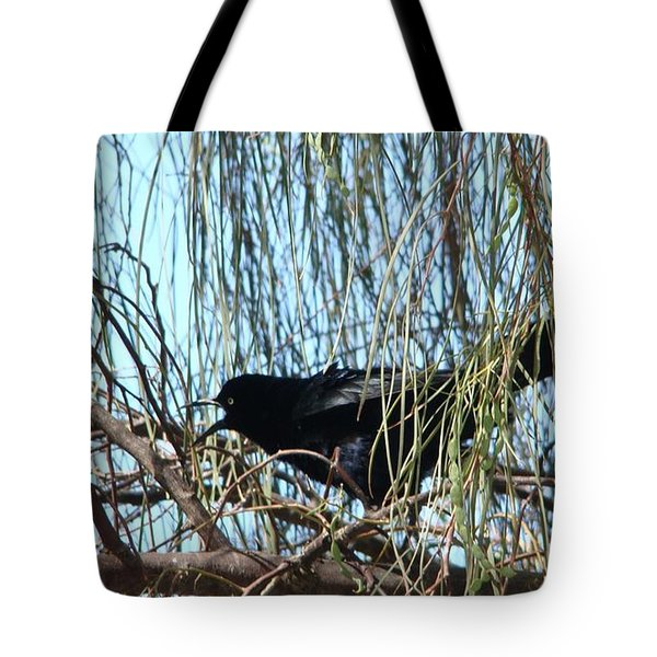 Great-tailed Grackle Tote Bag by Beverly Guilliams