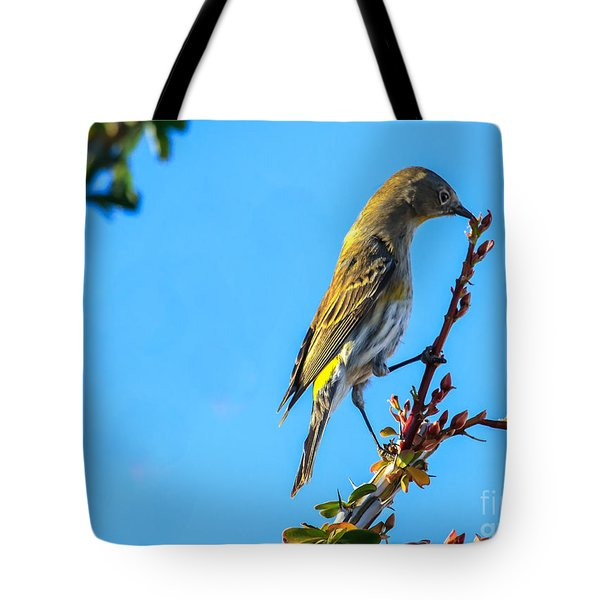 Yellow-rumped Warbler Tote Bag by Robert Bales