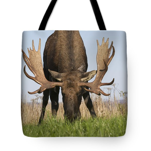 A Large Bull Moose Feeds Near Point Tote Bag by Doug Lindstrand