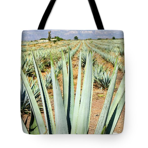 Agave Cactus Field In Mexico Tote Bag by Elena Elisseeva