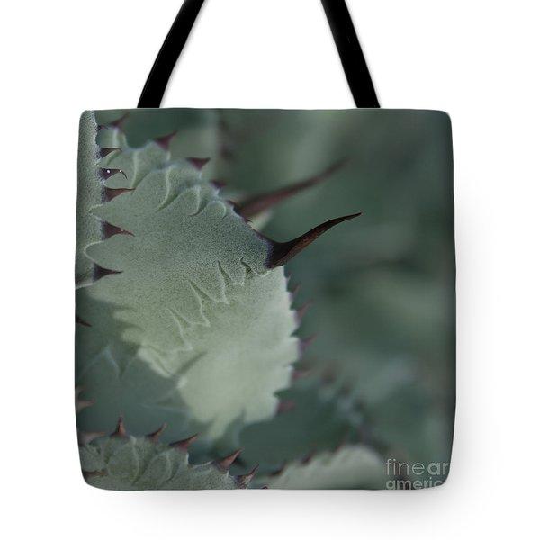 Agave parryi truncata - Artichoke Agave - Cactus and Succulents  Maui Hawaii Tote Bag by Sharon Mau