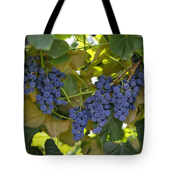 Agriculture - Concord Tablejuice Grapes Tote Bag by Gary Holscher