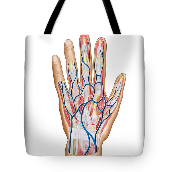 Anatomy Of Back Of Human Hand Tote Bag by Stocktrek Images