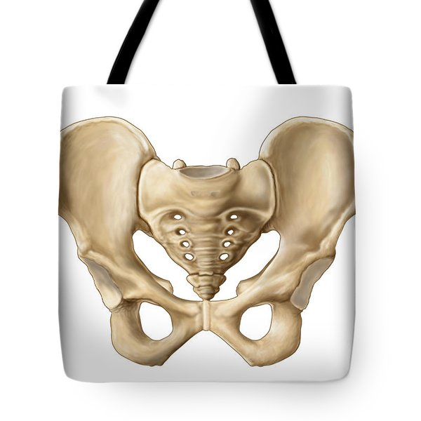 Anatomy Of Human Pelvic Bone Tote Bag by Stocktrek Images