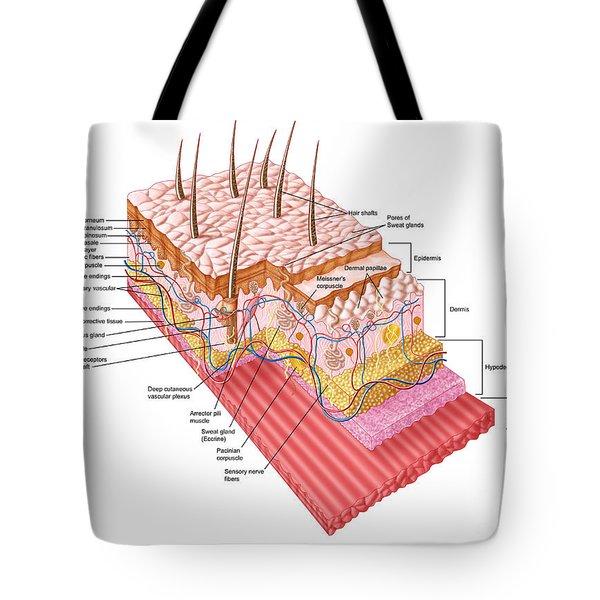 Anatomy Of The Human Skin Tote Bag by Stocktrek Images