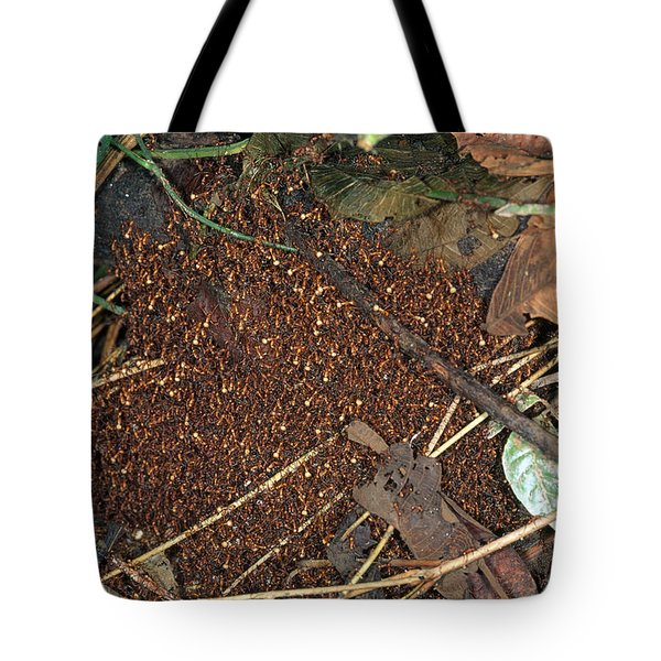 Army Ant Bivouac Site Tote Bag by Gregory G. Dimijian, M.D.