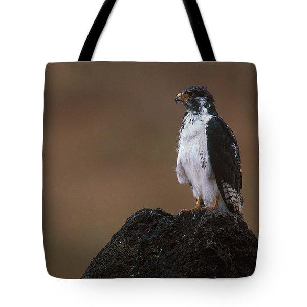 Augur Buzzard Tote Bag by Art Wolfe