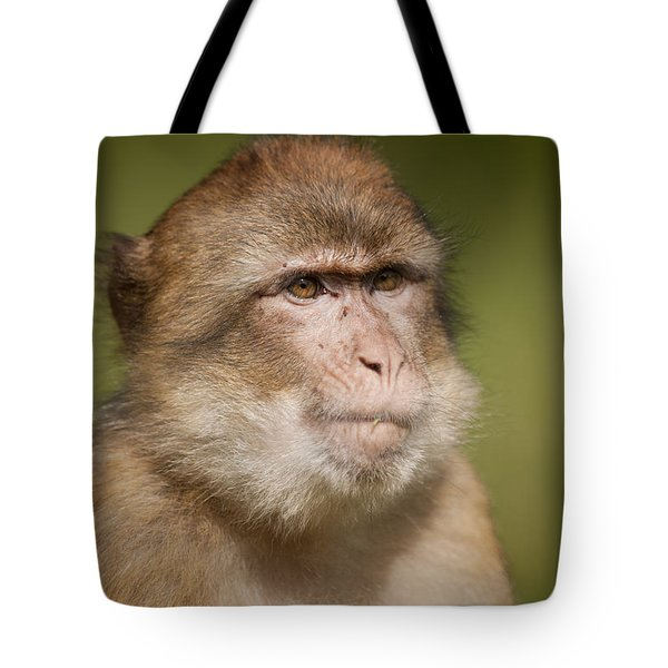 Barbary Macaque Tote Bag by Andy Astbury