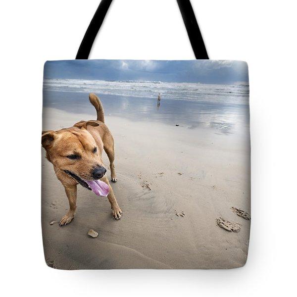 Beach Dog Tote Bag by Eldad Carin