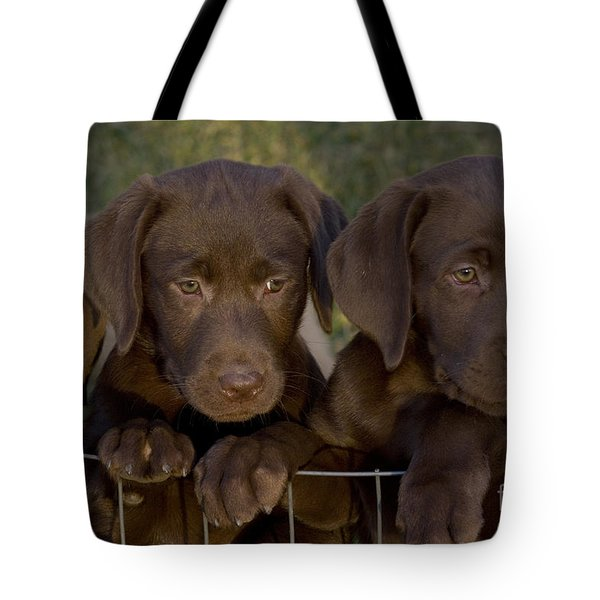 Chocolate Labrador Retriever Pups Tote Bag by Linda Freshwaters Arndt