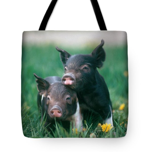 Domestic Piglets Tote Bag by Alan Carey