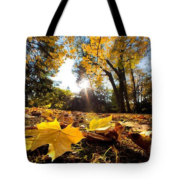 Fall Autumn Park. Falling Leaves Tote Bag by Michal Bednarek