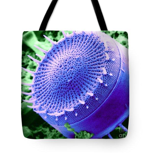 Freshwater Diatom, Sem Tote Bag by Asa Thoresen
