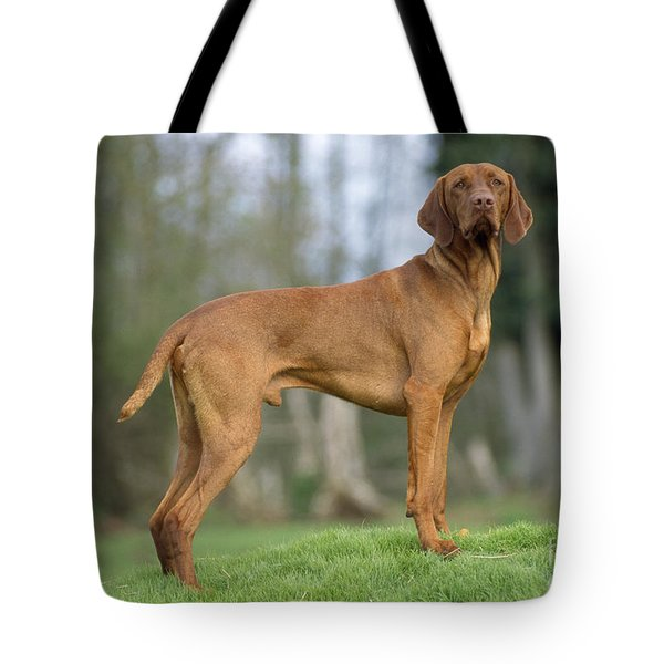 Hungarian Vizsla Dog Tote Bag by John Daniels
