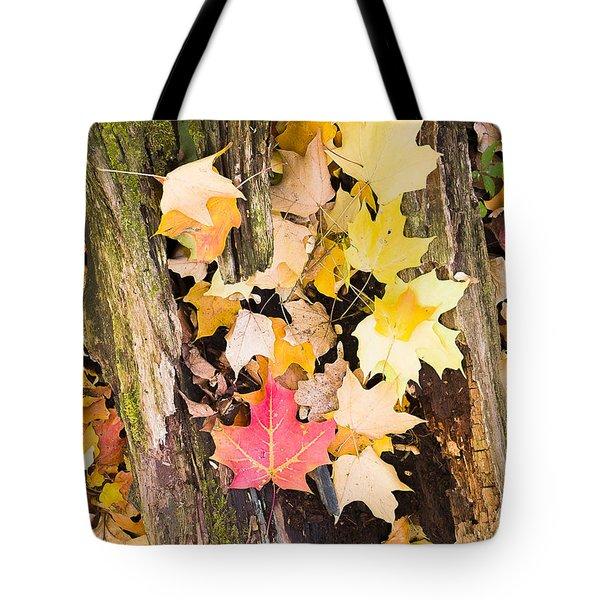 Maple Leaves Tote Bag by Steven Ralser