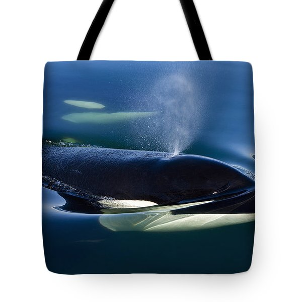 Orca Whale Surfaces In Lynn Canal Tote Bag by John Hyde