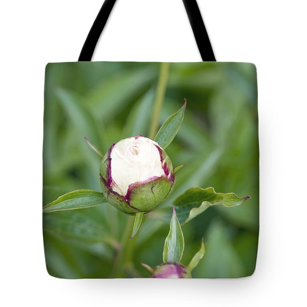 Paeonia Lactiflora Shirley Temple Tote Bag by Jon Stokes