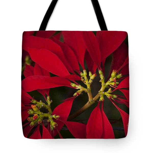 Poinsettia  - Euphorbia Pulcherrima Tote Bag by Sharon Mau