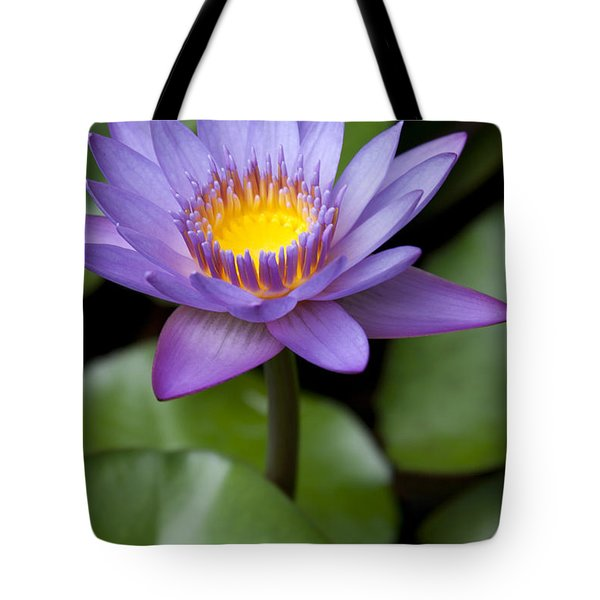 Radiance Tote Bag by Sharon Mau