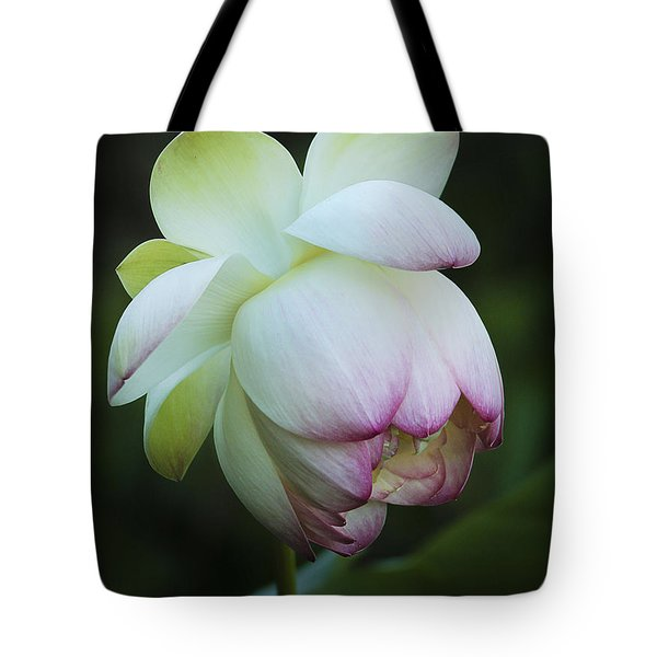 Shy Lotus Tote Bag by Jean Noren