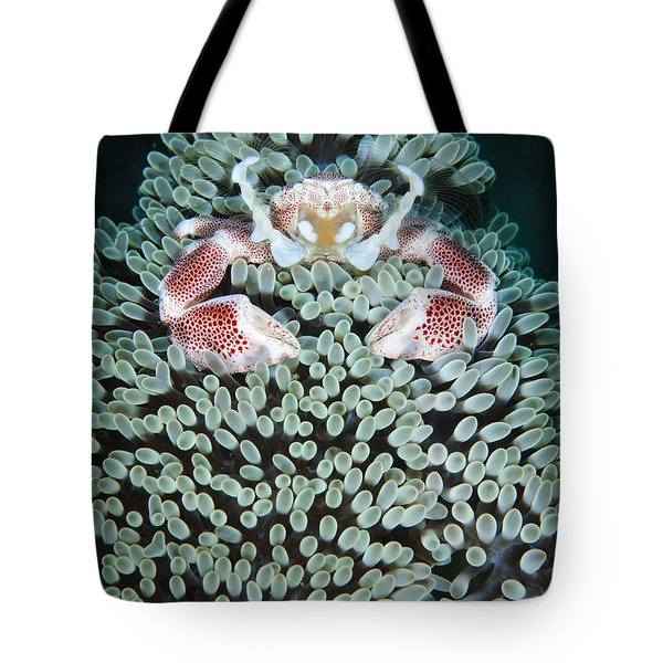 Spotted Porcelain Crab In Anemone Tote Bag by Steve Jones