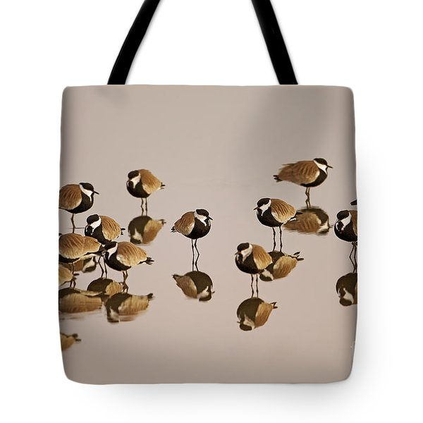 Spur-winged Lapwing Vanellus Spinosus Tote Bag by Eyal Bartov