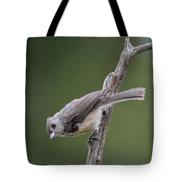 Tufted Titmouse Tote Bag by Todd Hostetter