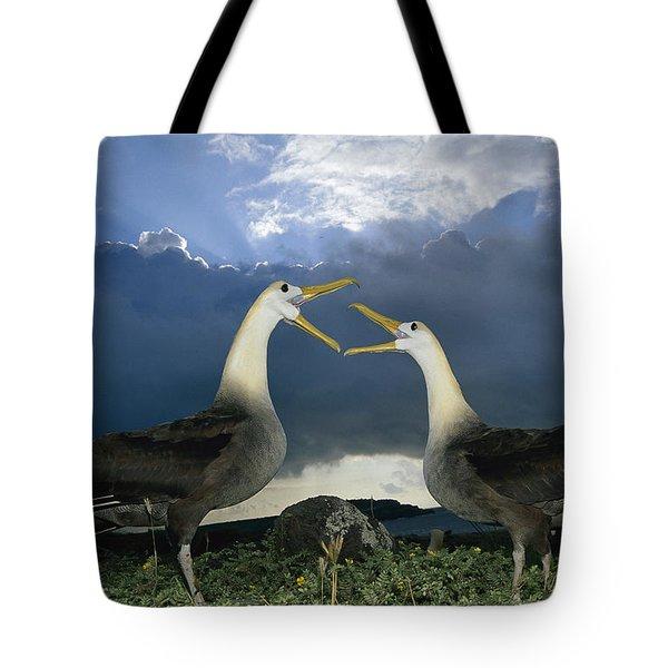 Waved Albatross Courtship Dance Tote Bag by Tui De Roy