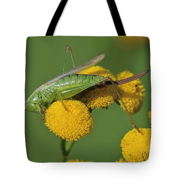 110221p245 Tote Bag by Arterra Picture Library