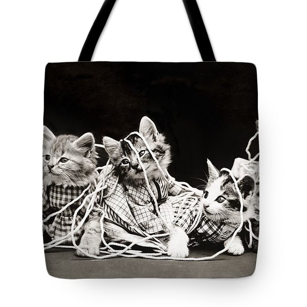 Frees Kittens, C1914 Tote Bag by Granger