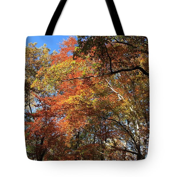 Autumn Trees Tote Bag by Frank Romeo