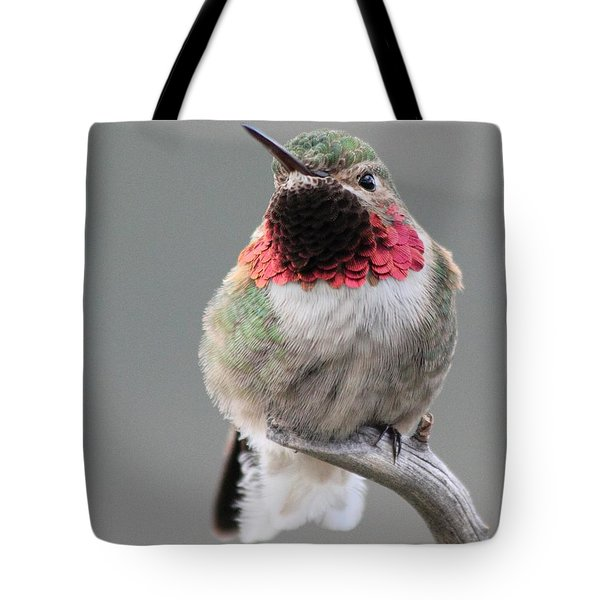 Broad-tailed Hummingbird Tote Bag by Shane Bechler