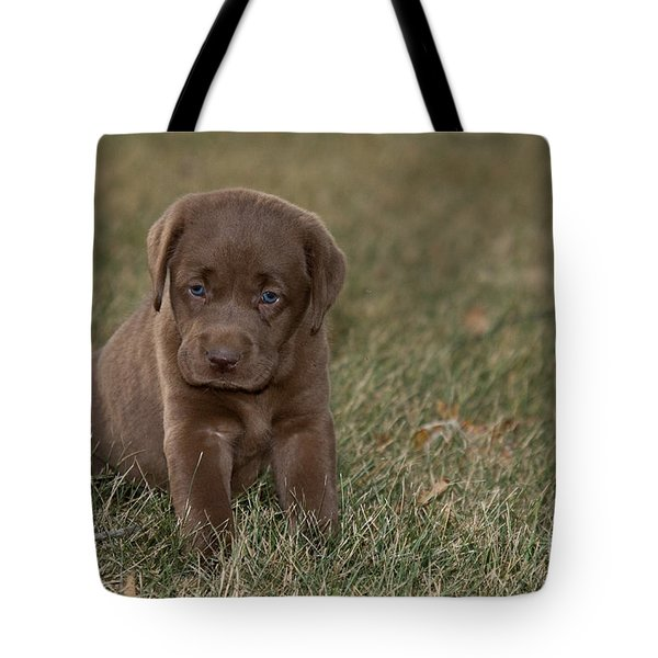 Chocolate Labrador Puppy Tote Bag by Linda Freshwaters Arndt